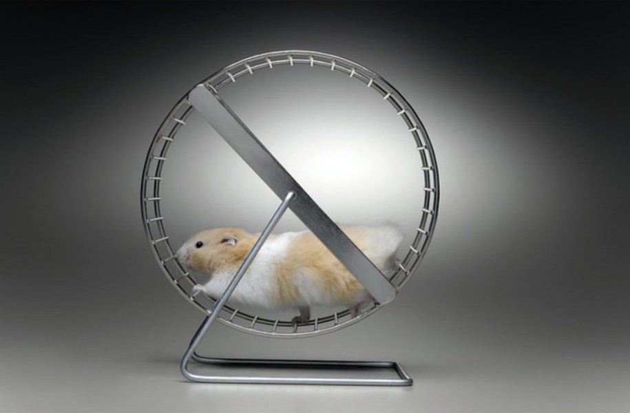 mouse excercising in a treadmill